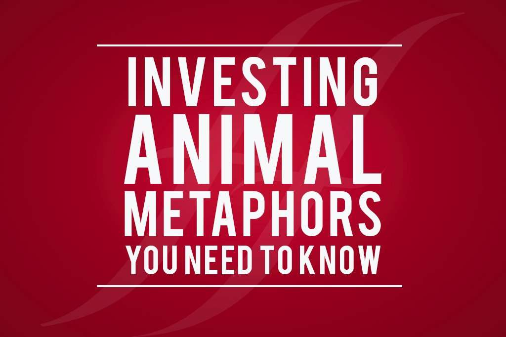 image reads 'investing animal metaphors you need to know'